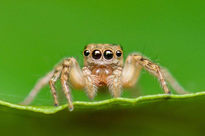 Ученые разработали точный датчик глубины пространства, используя глаза насекомых