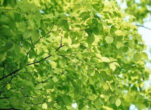 Айфоны научились определять вид дерева.