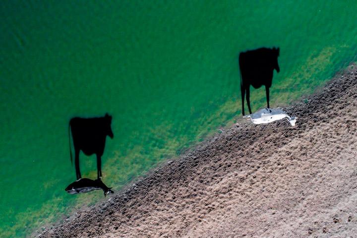 Лучшие фотографии, сделанные дронам