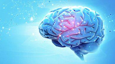 Активность мозга на протяжении жизненного цикла человека?