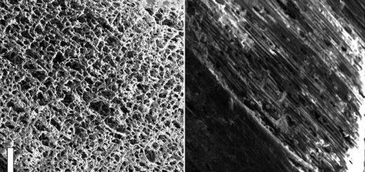 Новейший наноматериал научились добывать из сосны