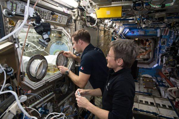 Внеземная жизнь на МКС. На внешней стороне станции обнаружены бактерии
