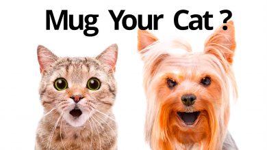Как оживить фото? С Mug Life сделать это очень просто!
