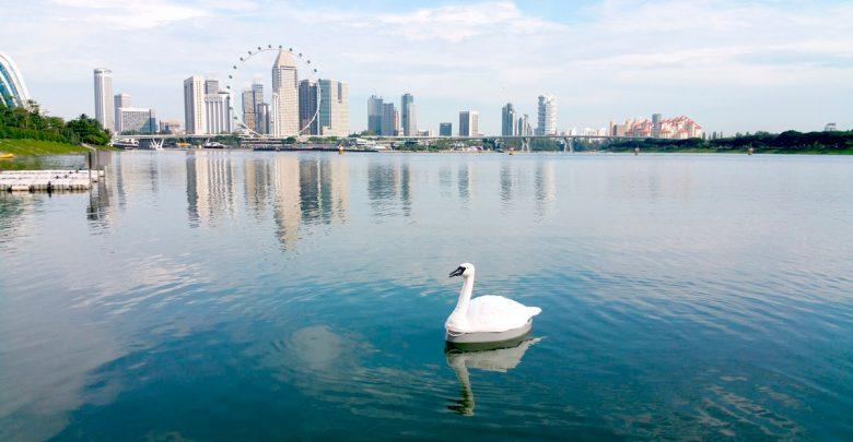 Робот-лебедь Сингапур